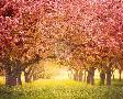 Irene Suchocki Pink Blossom