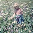 ChelseaCollection In The Spring Fields Giclee Canvas