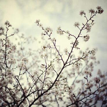 Irene Suchocki Meadow Bloom Giclee Canvas