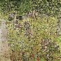 Gustav Klimt Orchard With Roses