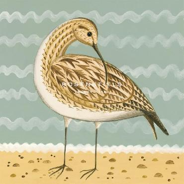 Catriona Hall Whimsical Whimbrel Giclee Canvas