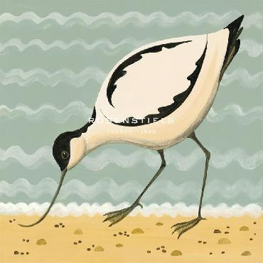 Catriona Hall Avuncular Avocet Giclee Canvas