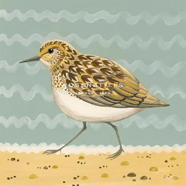 Catriona Hall Serious Sanderling Giclee Canvas
