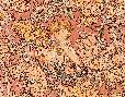 Alphonse Mucha Redhead Among Flowers