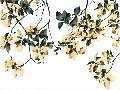 Jackie Battenfield Golden Flourish