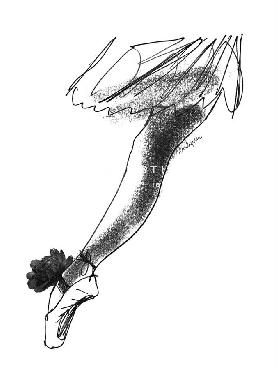 Eva Hjelte Ballet Sketch Giclee Canvas