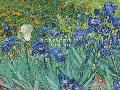 Vincent Van Gogh Irises, 1889  -  Focus