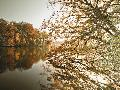 Assaf Frank Autumnal Reflections