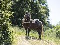 Gaetan Caron Lone Stallion