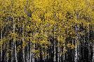 Irene Suchocki Among Trees