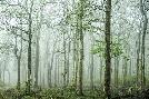 Bobby Joshi Forest Melody