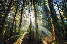 Bobby Joshi Enchanted Sunlight