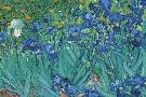 Vincent Van Gogh Irises, 1889  -  Detail