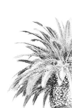 Irene Suchocki Palm Spring  -  Noir Giclee Canvas