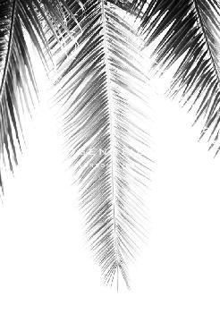 Irene Suchocki Palm Revive Noir Giclee
