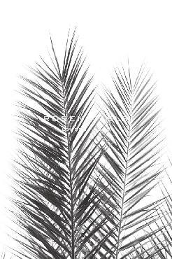Irene Suchocki Palm Crisp Noir Giclee Canvas