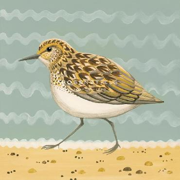 Catriona Hall Serious Sanderling