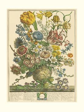 Robert Furber Twelve Months of Flowers 1730/March