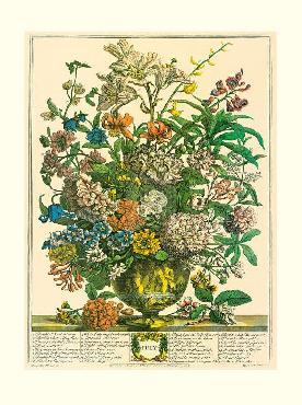 Robert Furber Twelve Months of Flowers 1730/July