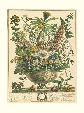Robert Furber Twelve Months of Flowers 1730/December