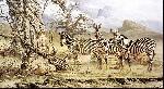 CRAIG BONE ZEBRAS