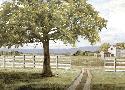 Mark Chandon Shady Tree