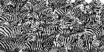 Mark Chandon Zebra Collage