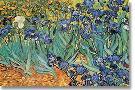 Vincent Van Gogh Garden of Irises