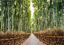 Pangea Images Bamboo Forest, Kyoto, Japan
