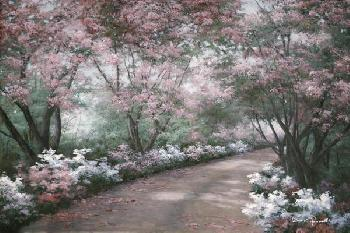 Diane Romanello Azalea Walk Giclee on Canvas