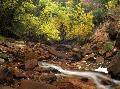 Tim Fitzharris Zion Canyon Near Emerald Pools, Zion National Park, Uta