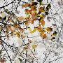 Gilbert Claes Autumn Song