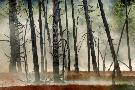Jure Kravanja Dead Wood