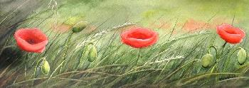 Emmeline Craig 3 Poppies Giclee on Canvas