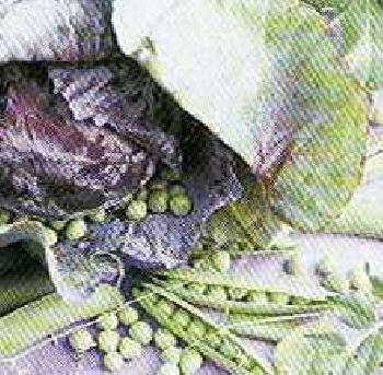 Point A La Ligne Fab French Paper Party Napkins - Vegetables