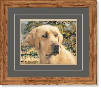Robert Abbett Flash Yellow Lab Framed Open Edition