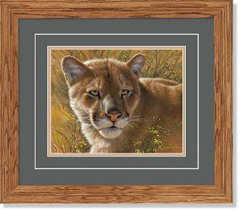 Lee Kromschroeder Golden Cat - Cougar Framed Open Edition