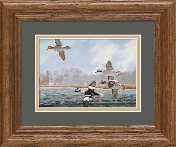 David Maass Autumn Flight - Buffleheads Framed Signed Open Edition