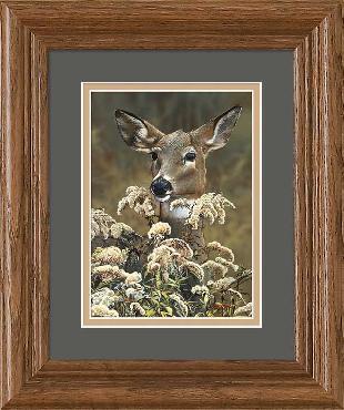 Scot Storm Doe Portrait - Deer Framed Open Edition
