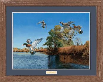 David Maass The Seton Channel - Wood Ducks Premium Framed Open Edition