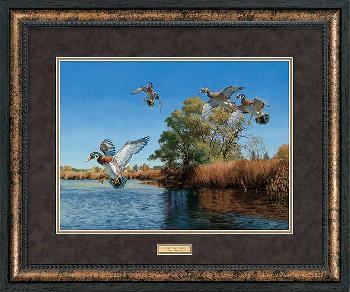 David Maass The Seton Channel - Wood Ducks Premium Plus Framed Open Edition