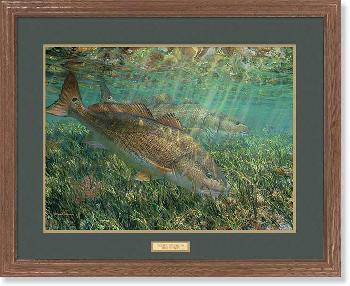 Mark Susinno Searching the Shallows - Red Drum Framed Open Edition