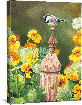 Susan Bourdet Chickadee & Nasturtiums Open Edition Wrapped Canvas