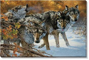 Lee Kromschroeder Body Language - Timber Wolves Open Edition Wrapped Canvas