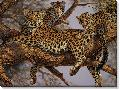 Lee Kromschroeder Family Tree Leopards