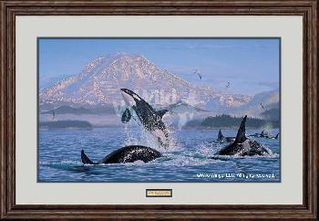 Lee Kromschroeder On the Pacific Rim - Orcas Framed