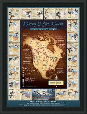David Maass Migration Map - Diving and Sea Ducks Framed Open Edition