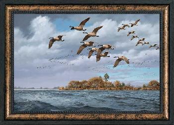 David Maass Eastern Shore - Canada Geese Framed Canvas