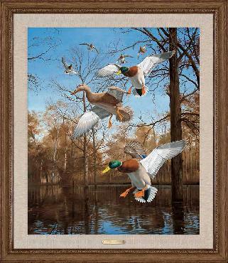 David Maass Greenhead Haven - Mallards Framed Canvas