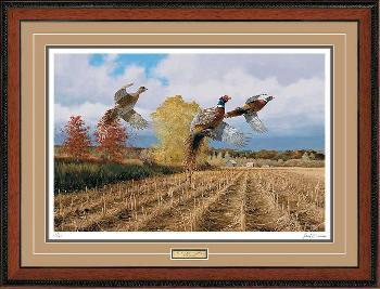 David Maass Hasty Ascent - Pheasants Framed Artist